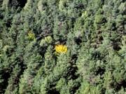 Das Gelbe vom . . . Wald