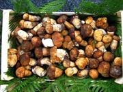 Funghi in Italia