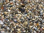 Muscheln wie Sand am Meer
