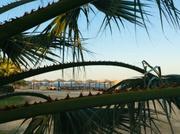 Palmen sind nicht ohne . .