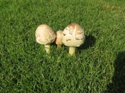 Pilze in der Anlage