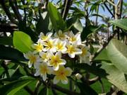 Duftende Blüten